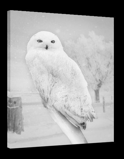 Kanwa NORDIC OWL 75 x 100 cm