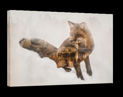 Fox - Autor nieznany - Obrazy na płótnie - e-oprawa.pl